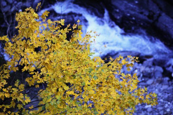 Schluchtenweg-Herbstblätter